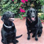 Lucy and Rosie, Winery Dogs